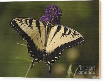 Papilio Yellow Wood Print by Randy Bodkins