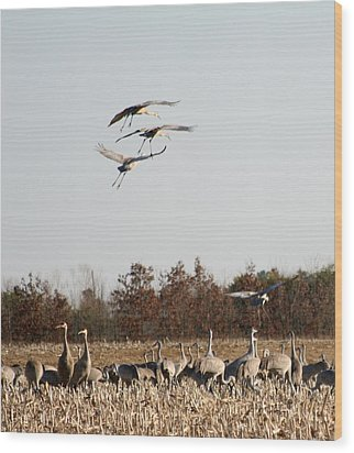Wood Print featuring the photograph Parachuting Cranes by Diane Merkle