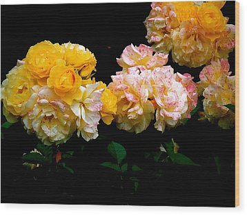 Parade Of Roses  Wood Print