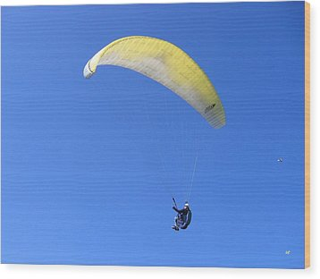 Paraglider And Seagull Wood Print by Will Borden