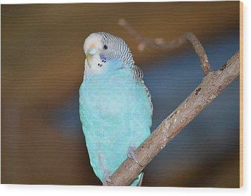 Parakeet Wood Print by Linda Geiger
