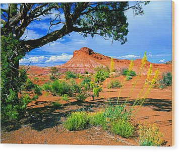Paria Wilderness Wood Print