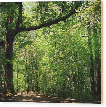 Paris Mountain State Park South Carolina Wood Print