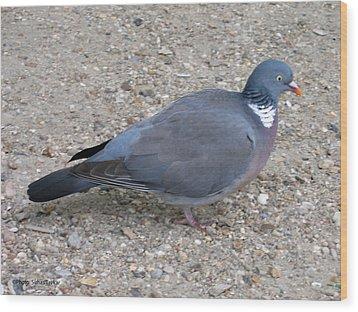 Wood Print featuring the photograph Paris Pigeon by Suhas Tavkar