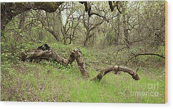 Park Serpent Wood Print by Carol Lynn Coronios