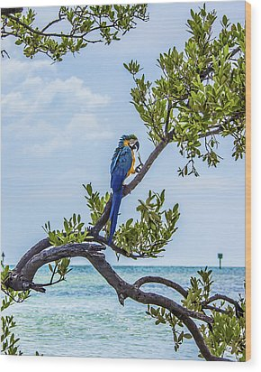 Wood Print featuring the photograph Parrot Above The Aqua Sea by Paula Porterfield-Izzo