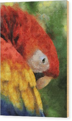 Parrot Wood Print by Elaine Frink