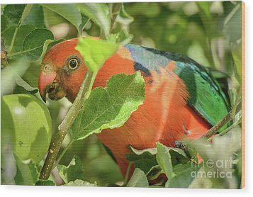 Wood Print featuring the photograph  Parrot In Apple Tree by Werner Padarin