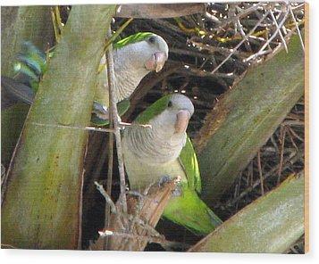 Parrot Pair Wood Print