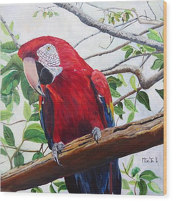 Parrot Portrait Wood Print by Marilyn  McNish