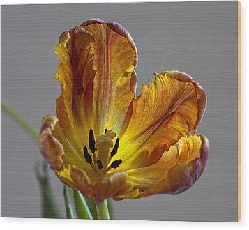Parrot Tulip 22 Wood Print by Robert Ullmann