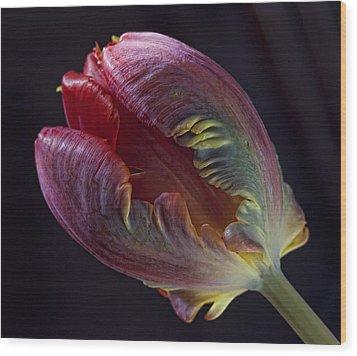 Parrot Tulip 5 Wood Print by Robert Ullmann