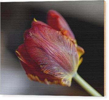 Parrot Tulips 13 Wood Print by Robert Ullmann