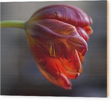Parrot Tulips 16 Wood Print by Robert Ullmann