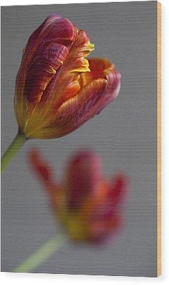 Parrot Tulips 17 Wood Print by Robert Ullmann