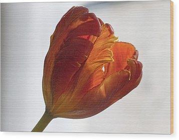 Parrot Tulips 19 Wood Print by Robert Ullmann
