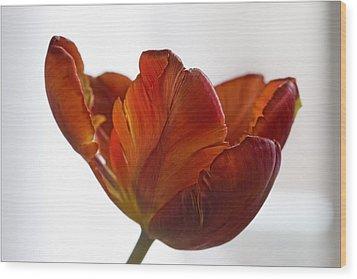 Parrot Tulips 20 Wood Print by Robert Ullmann