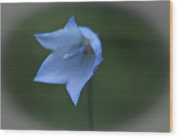 Wood Print featuring the photograph Parrys Bell Flower by Daniel Hebard