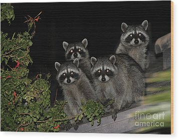 Party Of Five On The Roof Top Wood Print by Nina Prommer