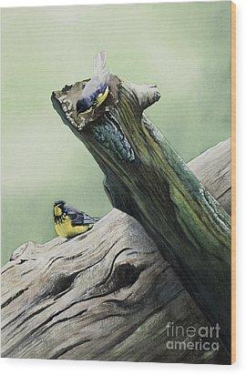 Parulines Du Canada Wood Print by Caroline Boyer