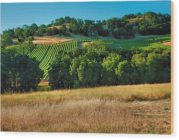 Paso Robles Vineyard Wood Print by Steven Ainsworth