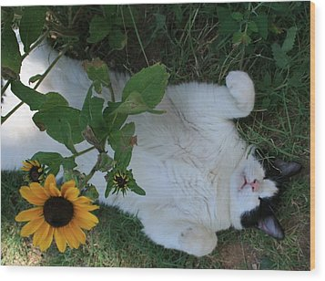 Passed Out Under The Daisies Wood Print by Marna Edwards Flavell