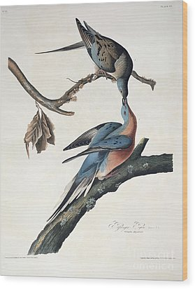 Passenger Pigeon Wood Print by John James Audubon