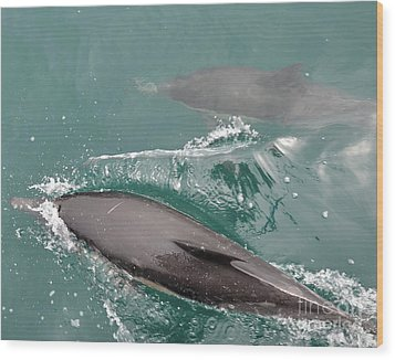 Passing Dolphins Wood Print by Timothy OLeary