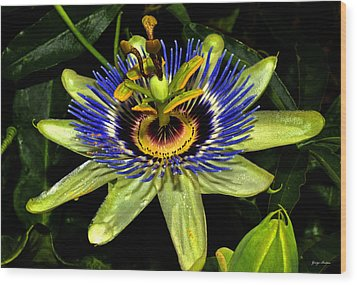 Passion Flower 003 Wood Print by George Bostian
