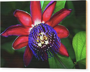 Wood Print featuring the photograph Passion Flower by Anthony Jones