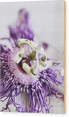 Wood Print featuring the photograph Passion Flower by Stephanie Frey