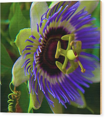 Passion-fruit Flower Wood Print by Betsy Knapp