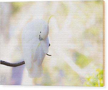 Pastel Cockatoo Wood Print by Avalon Fine Art Photography