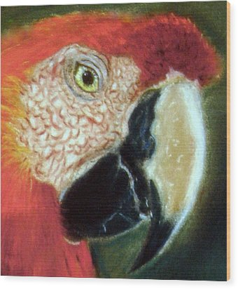 Wood Print featuring the pastel Pastel Of Red On The Head  by Antonia Citrino