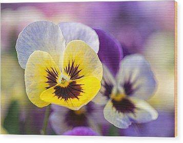 Pastel Pansies Wood Print