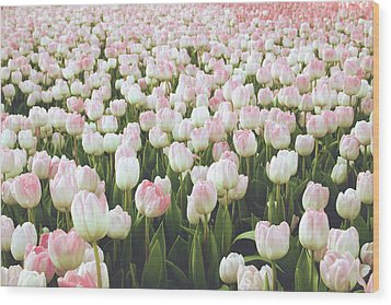 Wood Print featuring the mixed media Pastel Pink Tulips- Art By Linda Woods by Linda Woods
