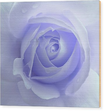 Pastel Purple Rose Flower Wood Print by Jennie Marie Schell