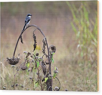 Pastoral Scene Bird On Sunflower Wood Print
