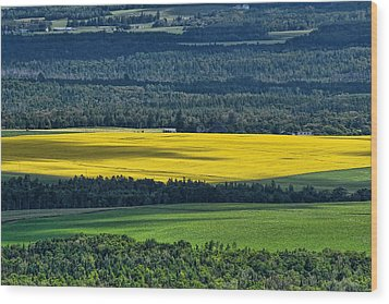 Wood Print featuring the photograph Patch Of Yellow by Gary Smith