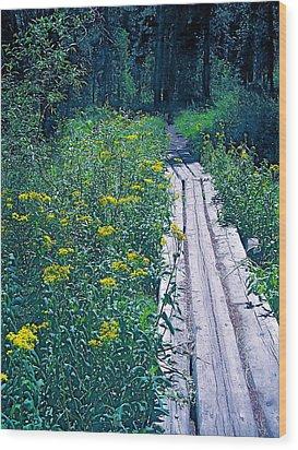 Path 4 Wood Print by Pamela Cooper