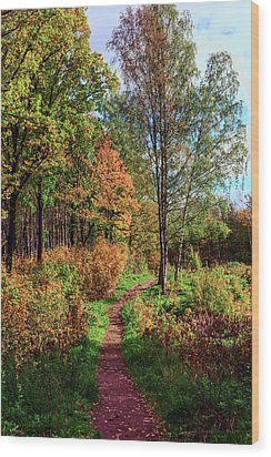 path in a beautiful country Park on a Sunny autumn day Wood Print
