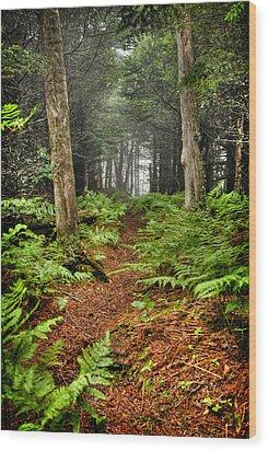 Path In The Ferns Wood Print