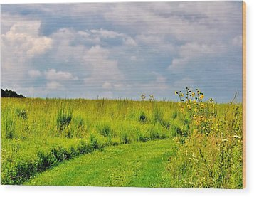 Pathway Through Wildflowers Wood Print