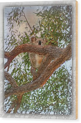 Wood Print featuring the photograph Patience Brings Koalas by Hanny Heim
