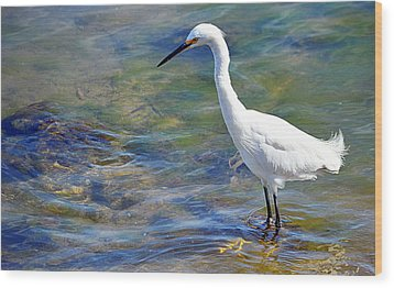 Patient Egret Wood Print by AJ Schibig