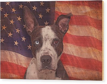 Patriotic Pit Bull  Wood Print by Brian Cross