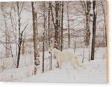 Pausing Wood Print by Cheryl Helms