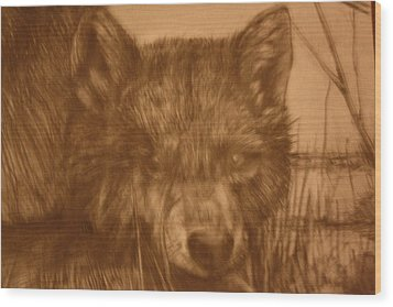 Pd9-10 Wood Print by Shannon Rains