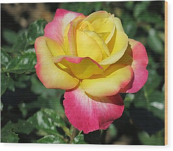 Peace And Love Rose Wood Print