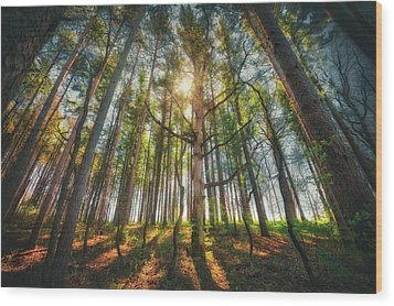 Peaceful Forest 5 - Spring At Retzer Nature Center Wood Print by Jennifer Rondinelli Reilly - Fine Art Photography